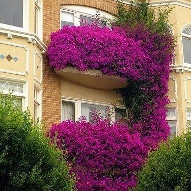 تزیین نمای ساختمان با گل